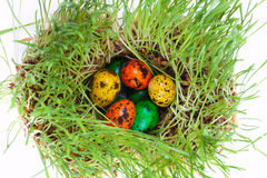 Easter colorful eggs on grass Stock Photo