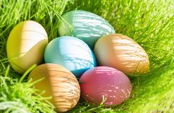Easter colorful eggs in spring green grass in sunlight floral abstract background royalty free stock images