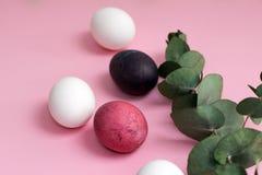 Easter colorido pintou ovos em tons cor-de-rosa e brancos com um ramo verde do eucalipto em um fundo cor-de-rosa Fotografia de Stock Royalty Free