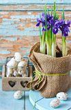 Easter. Easter composition with beautiful spring flower and eggs and hyacinth royalty free stock image