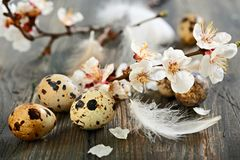 Easter composition with blooming branch. Stock Images