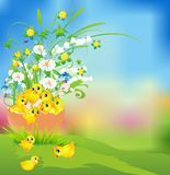 Easter composition with chicken Royalty Free Stock Photos