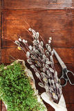Easter composition of cress and catkins on wooden table Stock Images