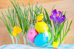 Easter composition with crocuses and colored eggs. Easter composition with crocuses, colored eggs in a glass vase and tiny chicks Royalty Free Stock Photos