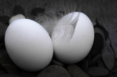 Easter composition with egg and feather Stock Photography