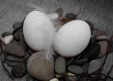 Easter composition with egg and feather Royalty Free Stock Photography
