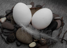 Easter composition with egg and feather Stock Images