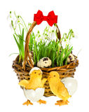 Easter composition with funny chicken and flowers Stock Photos