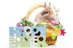 Easter composition Stock Photos
