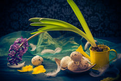 Easter composition hyacinth Easter eggs feathers Stock Images