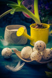 Easter composition hyacinth Easter eggs feathers Stock Image
