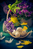 Easter composition hyacinth Easter eggs feathers Royalty Free Stock Images