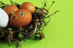 Brown egg with curious eye among multicolored eggs in nest of birch twigs with green leaves and earrings on light green background stock photography