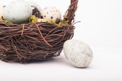 Easter composition with quail eggs in basket on a wooden backrou. Nd. Top view. Holiday card stock image