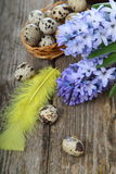 Easter composition with quail eggs and hyacinth Royalty Free Stock Image