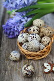 Easter composition with quail eggs and hyacinth Stock Photo