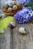 Easter composition with quail eggs and hyacinth Stock Images