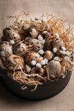 Easter composition of Easter quail eggs in the nest on light background. Retro vintage style stock images