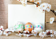 Easter composition of quail eggs and sprigs of apricot tree. There is room for text Stock Photo