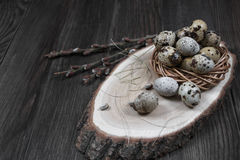 Easter composition with quail eggs and twigs of willow blossom. Easter composition with quail eggs in a nest  and twigs of willow blossom Stock Photography