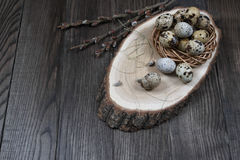 Easter composition with quail eggs and twigs of willow blossom. Easter composition with quail eggs in a nest  and twigs of willow blossom Stock Images