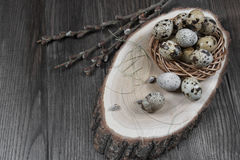 Easter composition with quail eggs and twigs of willow blossom. Nest with quail eggs, Easter concept Royalty Free Stock Image