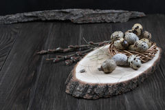Easter composition with quail eggs and twigs of willow blossom. Nest with quail eggs, Easter concept Royalty Free Stock Images