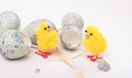 Easter composition with quail eggs and yellow chicken on a woode. N backround. Top view. Holiday card stock images