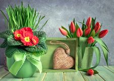 Easter composition with red tulips and primrose flowers, green b Stock Image