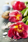 Easter composition with tulips Stock Photos