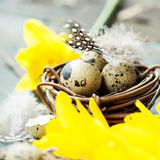 Easter composition with tulips, colorful eggs and nest Stock Photo