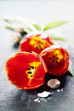 Easter composition with tulips Royalty Free Stock Images