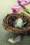 Easter composition with tulips and nest Royalty Free Stock Photo