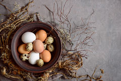 Easter composition with various natural coloured eggs Royalty Free Stock Photography
