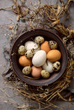 Easter composition with various natural coloured eggs Royalty Free Stock Photos