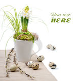 Easter composition with white hyacinth in white mug Royalty Free Stock Image