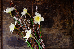 Easter composition with willow and daffodil on wood table Stock Images