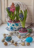 Easter composition on the windowsill of hyacinths Royalty Free Stock Image
