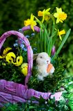 Easter compositions Stock Images