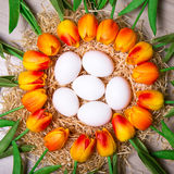 Easter concept - close up of white eggs and tulip flowers Stock Photos