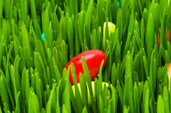 Easter concept - colourful eggs in gass Royalty Free Stock Photography