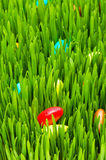 Easter concept - colourful eggs in grass Stock Image