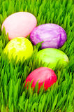 Easter concept - colourful eggs in grass Royalty Free Stock Photo
