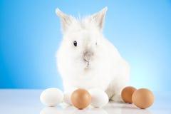 Easter concept. Easter motive. White Easter Bunny Stock Photos