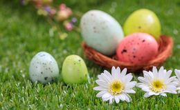 Easter concept. White daisies on green grass, blurred easter eggs background. Selective focus on the flowers stock image