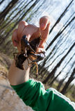 Easter crayfish. An easter crayfish being held in hand royalty free stock photos