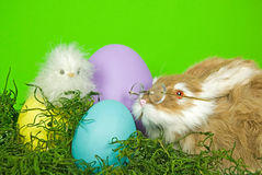 Easter Critters Royalty Free Stock Photos