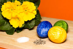 Easter custom. Easter eggs with salt,pepper and primeroses Stock Images