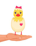 Easter cute chick Royalty Free Stock Photography
