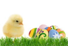 Easter cute chick with eggs Stock Photos